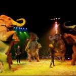 circo-animali-150×150