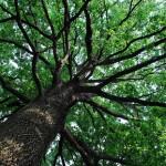 Protesta al Berlinguer, si ripiantano gli alberi