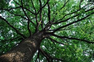albero-300×200