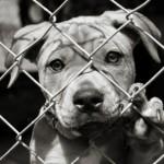 Canile abusivo a Valle San Bartolomeo, disagio per un centinaio di cani