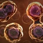 cellule-staminali-150×150