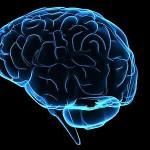 cervello-150×150