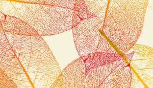 foglie-autunno-300×172