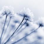 gelo-soffioni-inverno-freddo-150×150