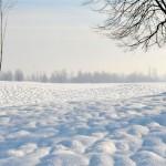 Neve e gelo mettono a rischio l'agricoltura alessandrina