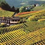 Piano B per il turismo: Alba, Asti e Alessandria tutte insieme appassionatamente