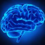 Alla scoperta del cervello: ad Alessandria incontro sulle neuroscienze