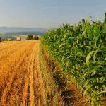 Non piace il super Consorzio agrario, Cia e Confagricoltura se ne vanno
