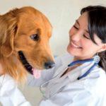Omeopatia veterinaria, consulti  gratuiti in provincia