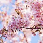 Bosco fiorito, la primavera èarrivata